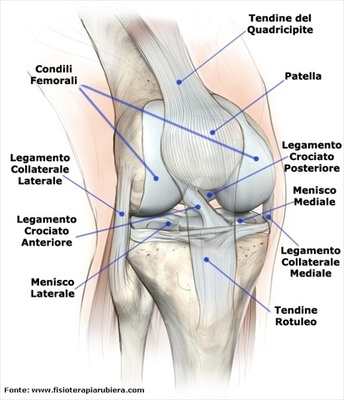 anatomia-ginocchio